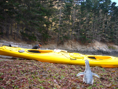 yappy and kayak